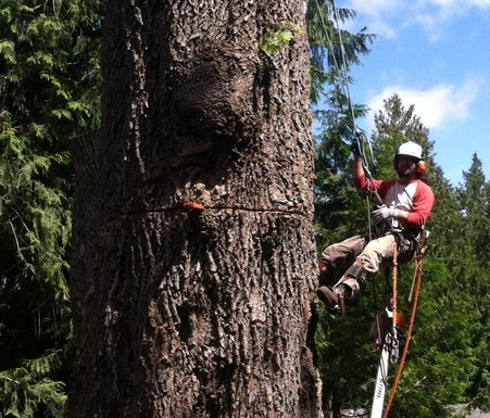 Free estimates from Tacoma arborists