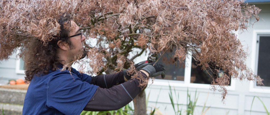 Tree Pruning and Trimming from Certified Arborist