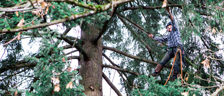 Professional Tree Service & Arborist