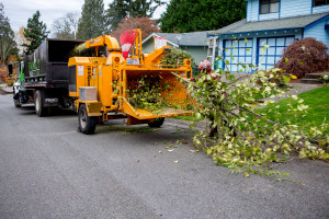 Cleaning up after tree removal